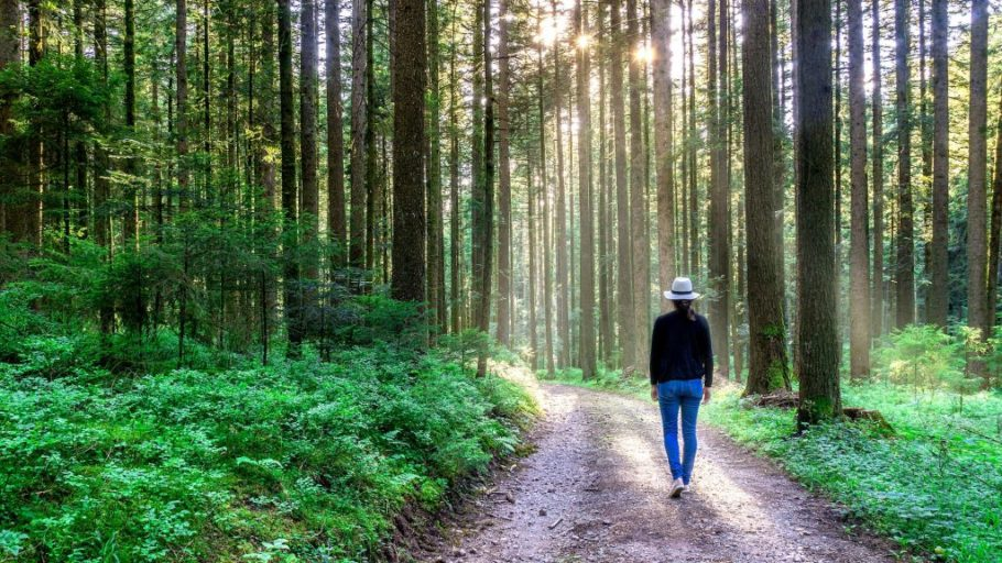What is forest bathing & how is it therapeutic?